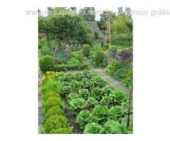 Transforme seu jardim em uma horta produtiva